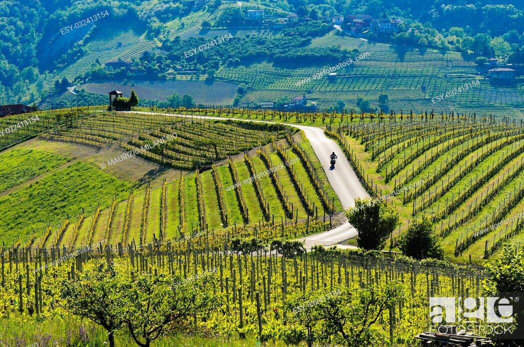 Stock Photo: Motorcyclist on the road passing through the hills and the suggestive vineyards above the city of Alba Piedmont Italy.