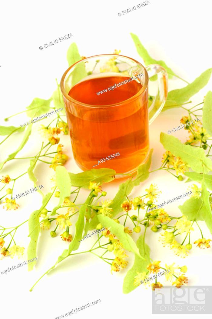 Stock Photo: Linden (Tilia platiphyllos) tea.