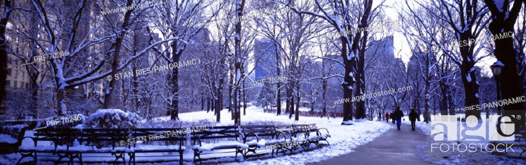 Stock Photo: Winter Central Park NY USA.