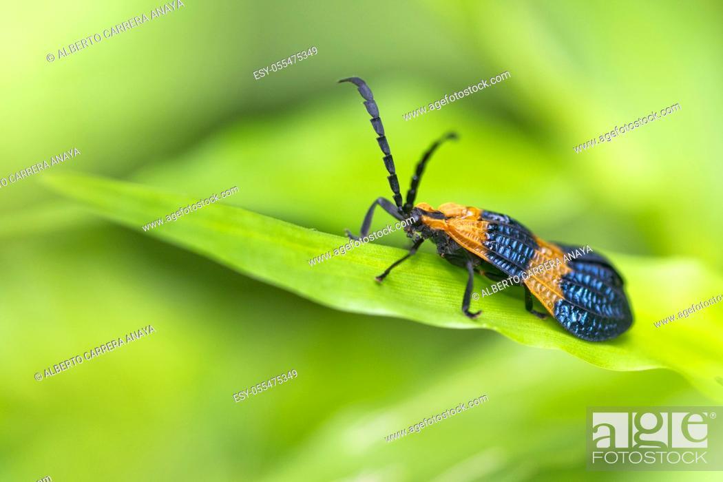 Imagen: Butterfly, Tropical Rainforest, Marino Ballena National Park, Uvita de Osa, Puntarenas, Costa Rica, Central America, America.