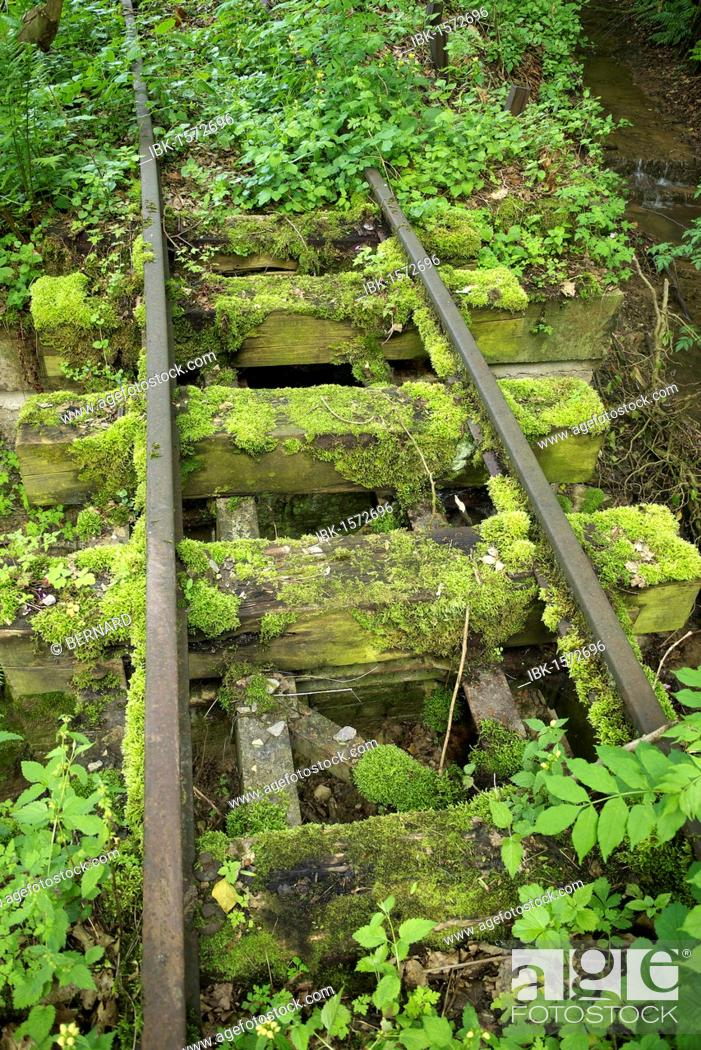 Stock Photo: Old narrow-gauge railway tracks overgrown with moss and plants.