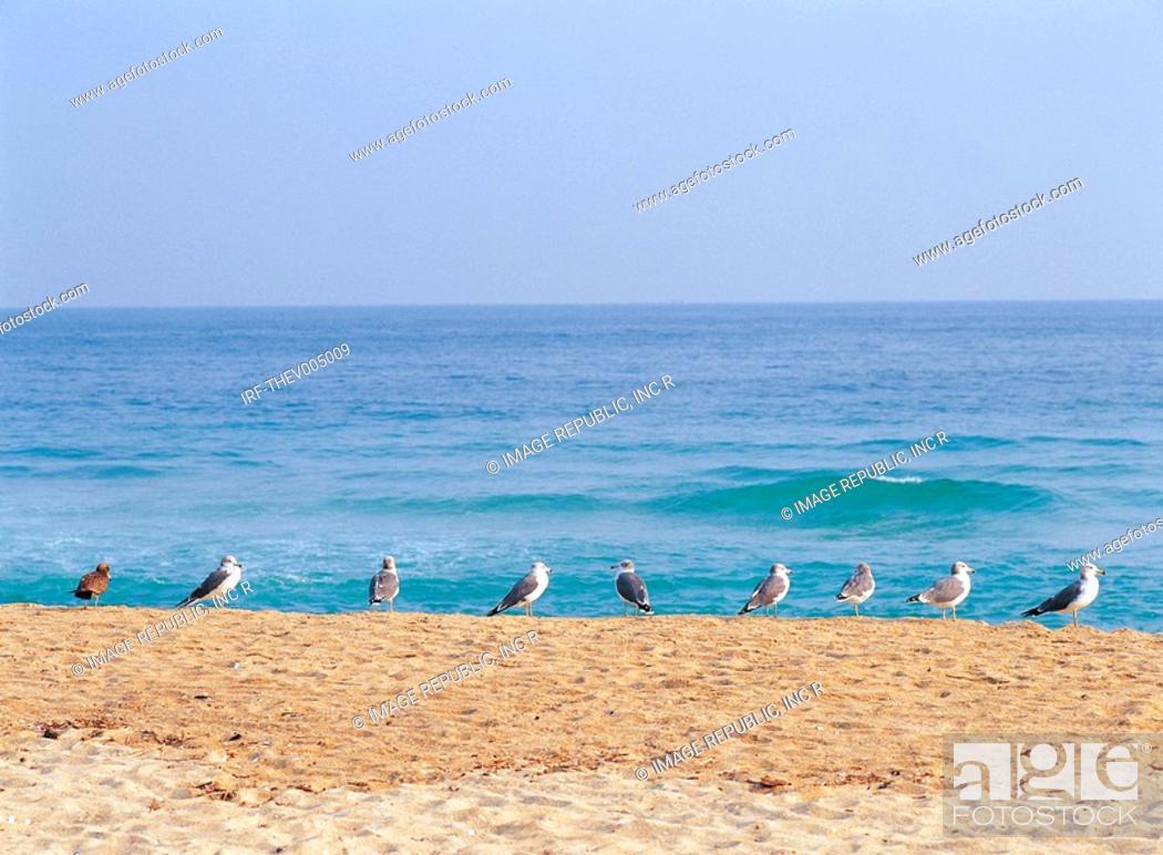 Stock Photo: beach and gulls.