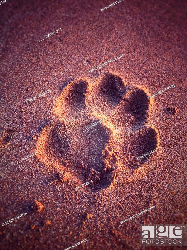Stock Photo: Dog paw print in the sand.