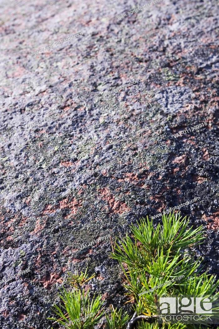 Stock Photo: Leaves, Rough, Grass, Surface, Pattern, Appearance.
