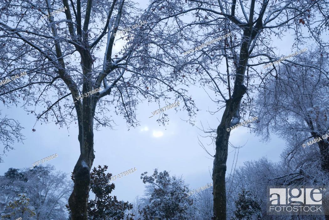 Stock Photo: Snow covered Retiro park. Madrid, Spain.