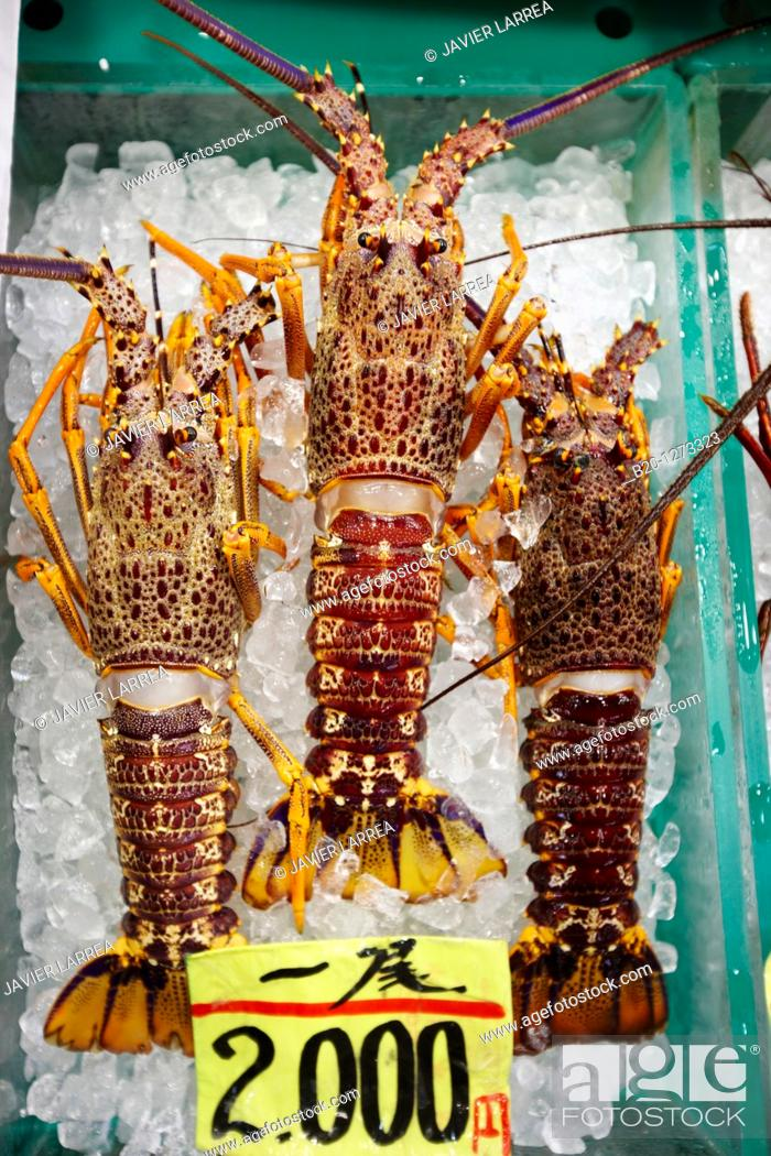 Stock Photo: Lobster, Tsukiji fish market, Tokyo, Japan.