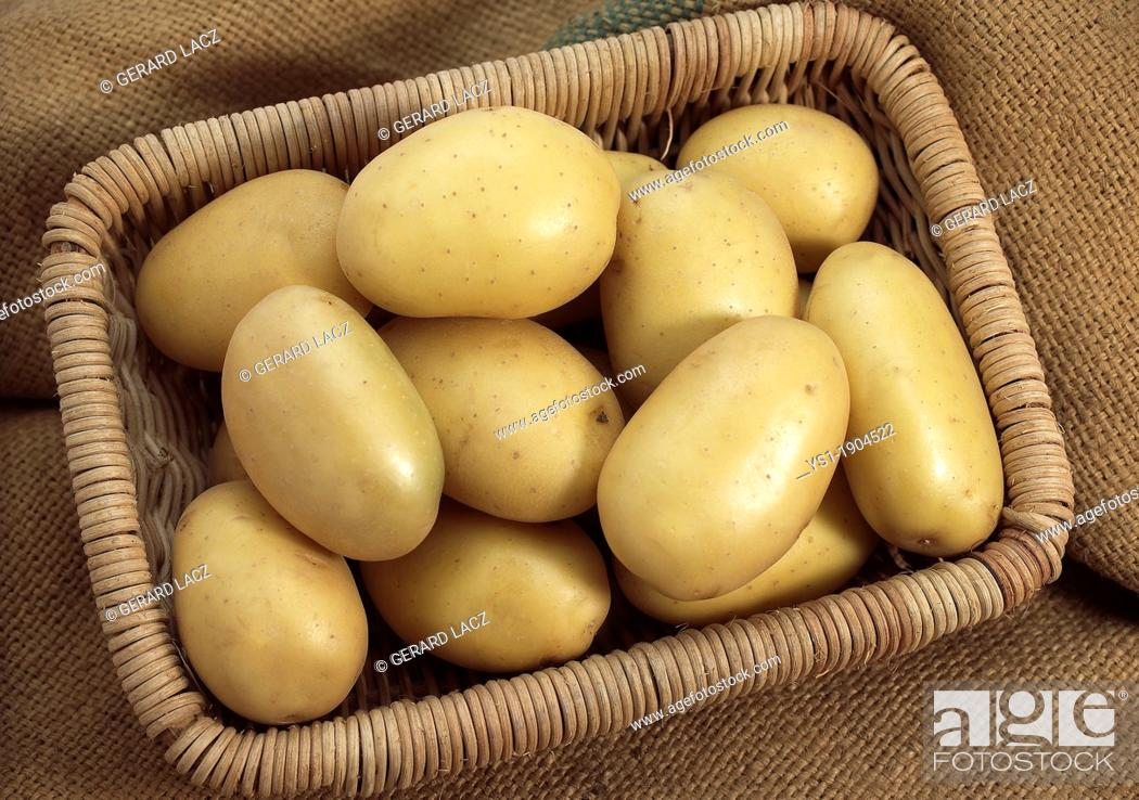 Stock Photo: Mona Lisa Potato, solanum tuberosum, Vegetables in Basket.