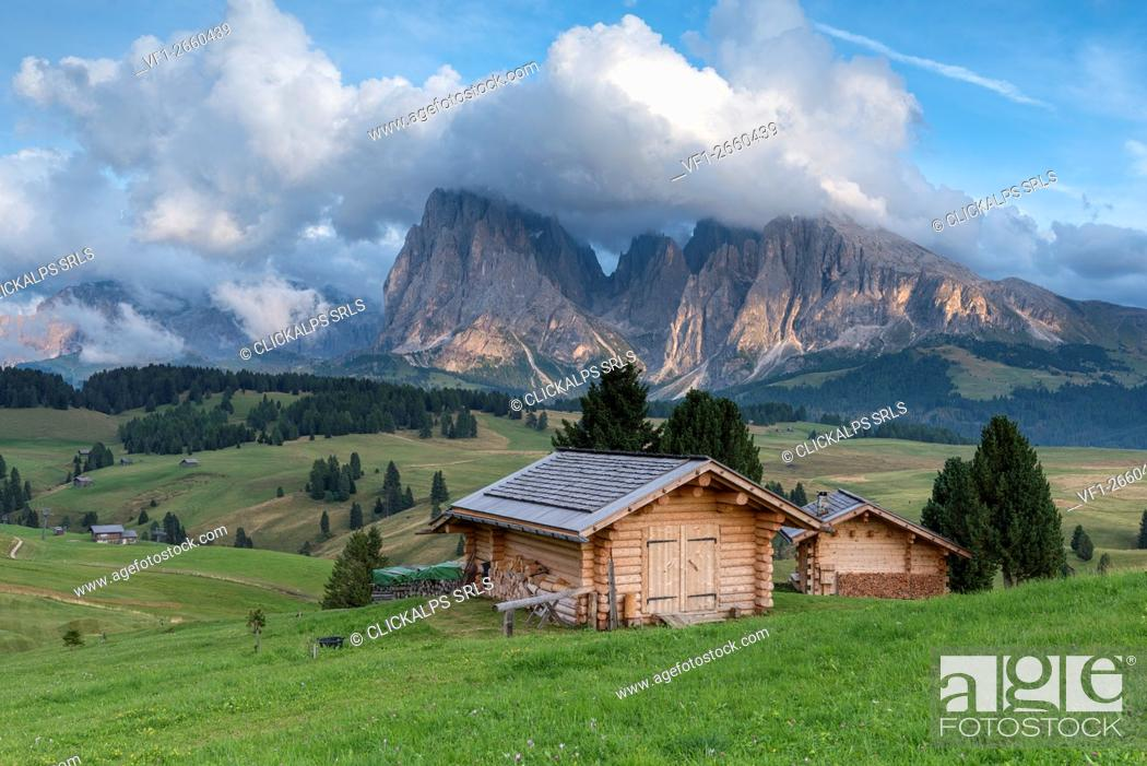 Stock Photo: Alpe di Siusi/Seiser Alm, Dolomites, South Tyrol, Italy. View from the Alpe di Siusi to the peaks of Sassolungo/Langkofel and Sassopiatto / Plattkofel.