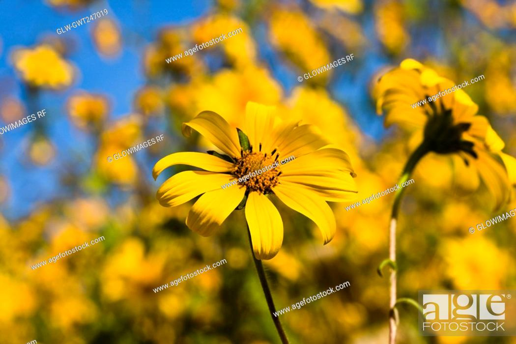 Stock Photo: Close-up of a flower, Arrazola, Oaxaca State, Mexico.