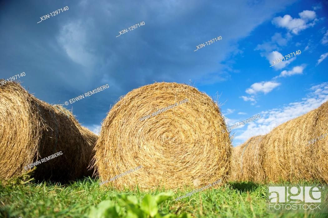Stock Photo: Round hay bales.