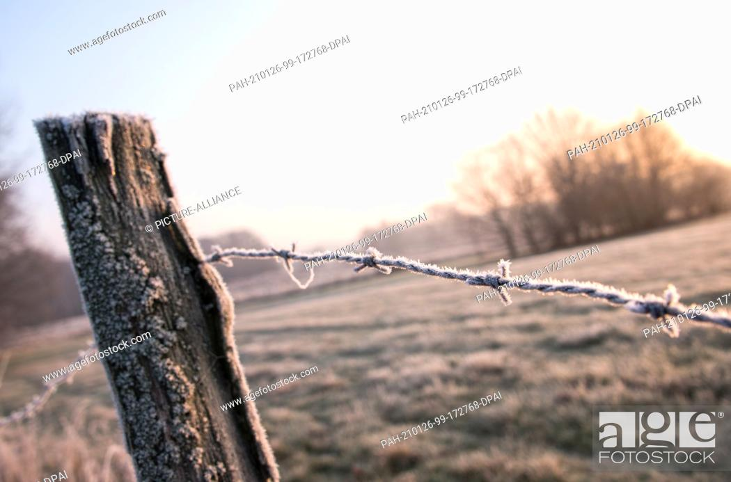 Imagen: 26 January 2021, Hamburg: A pasture fence is covered with ice in the district of Billwerder in the Boberger Niederung nature reserve.