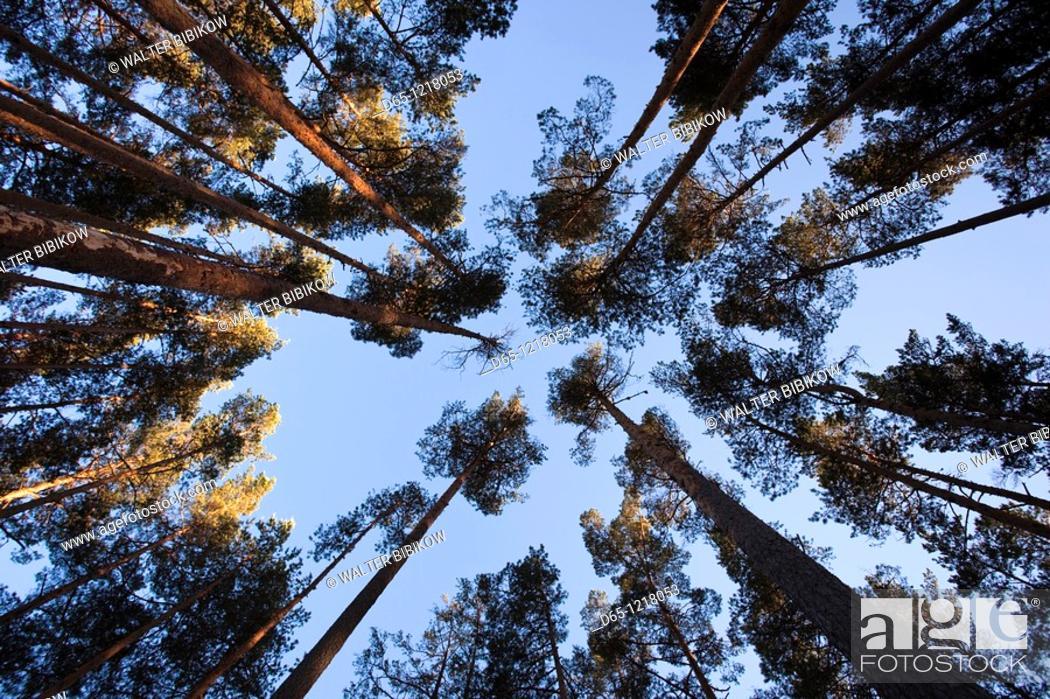 Stock Photo: Estonia, Southwestern Estonia, Vorts Jarv lake area, Vehendi, inside the forest.