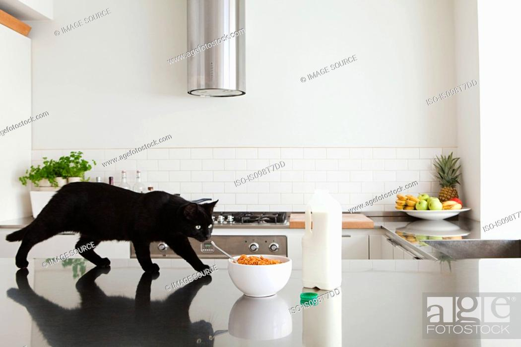 Stock Photo: Black cat on counter with milk and cereal.