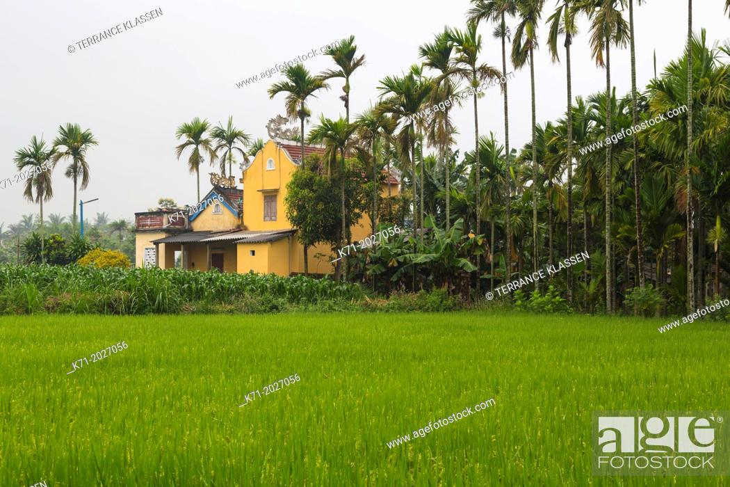 Stock Photo: Rice fields outside Kim Bong Village near Hoi An, Vietnam, Asia.