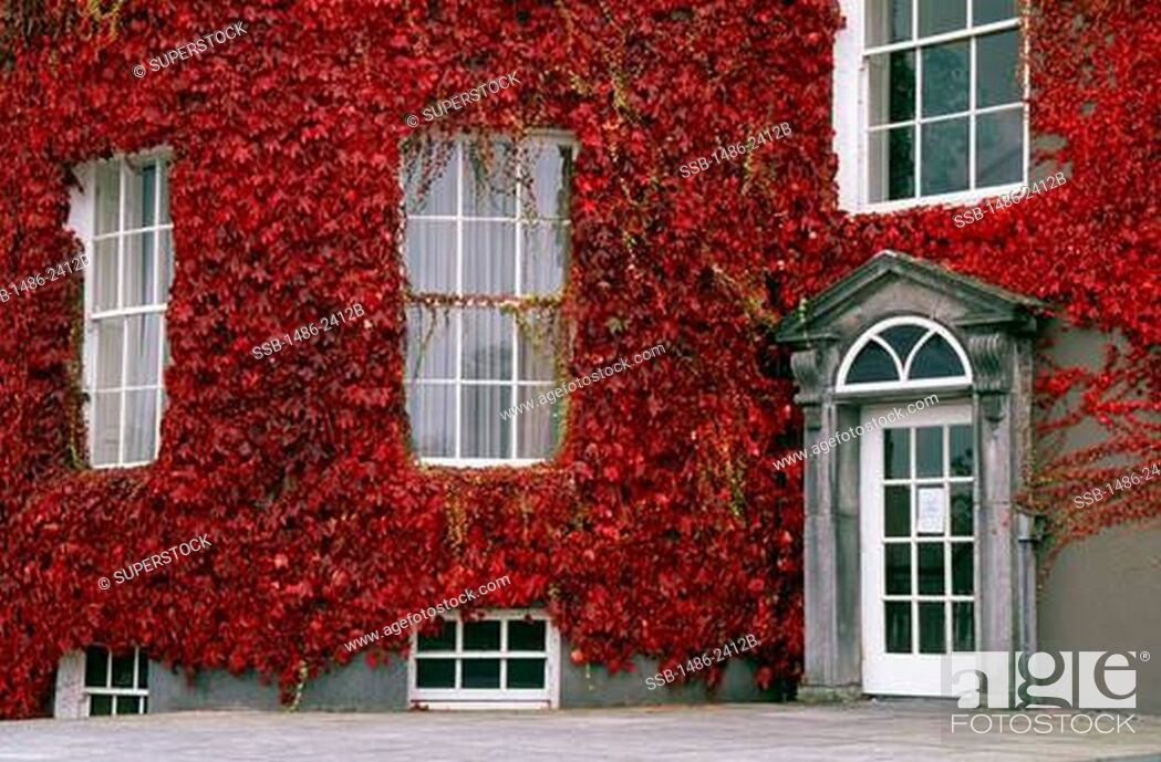Stock Photo: Ivy covering a house, Butler House, Kilkenny, County Kilkenny, Ireland.