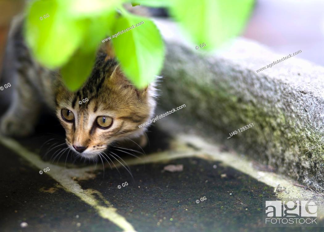 Stock Photo: Kitten peeking from behind pot.