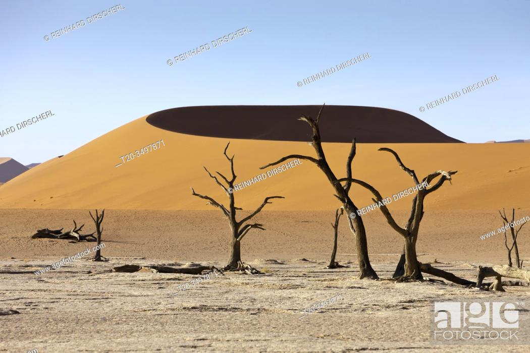 Stock Photo: Dead Acacia Trees in Hiddenvlei, Namib Naukluft Park, Namibia.