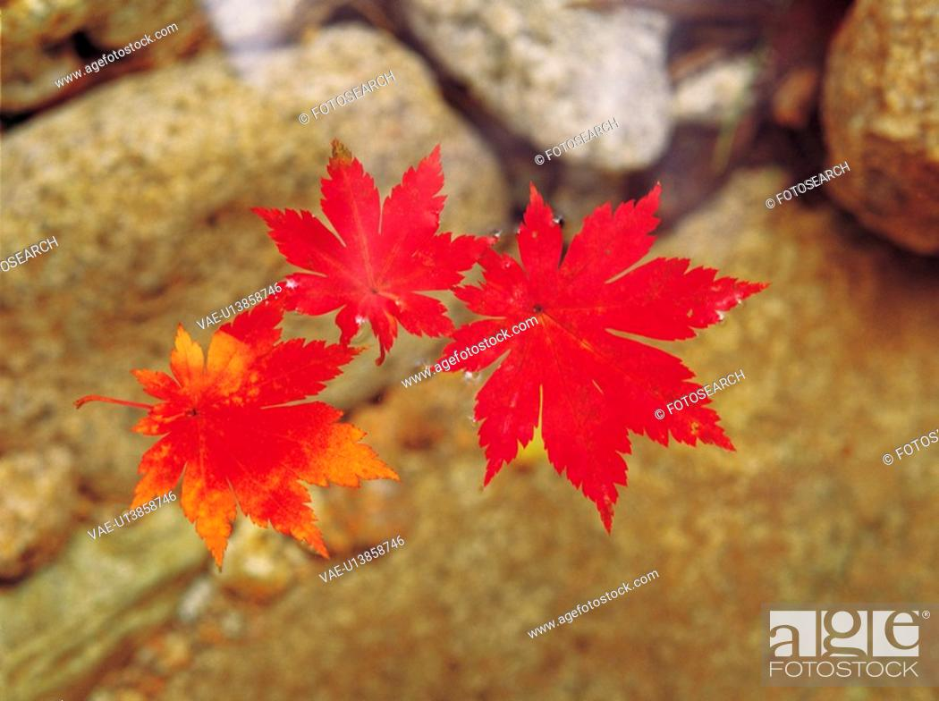 Stock Photo: plant, red, water, leaf, yellow, tree.