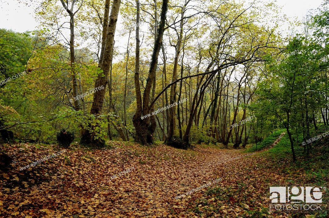 Stock Photo: forest in autumn in Hernani, Basque Country, Spain.