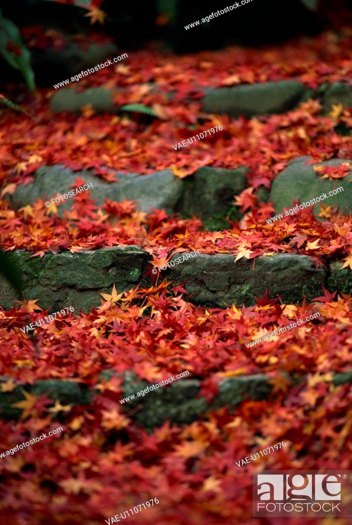 Stock Photo: The Stone Steps With Autumn Leaves.