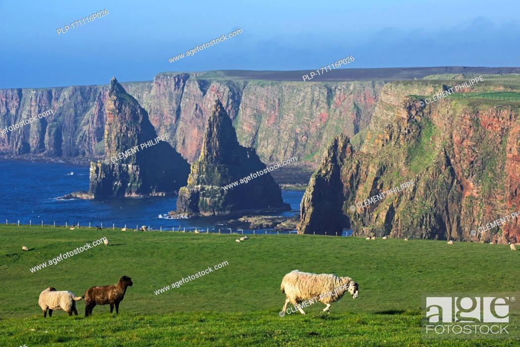Stock Photo: Duncansby Stacks, rock pinnacles south of Duncansby Head near John o' Groats, Caithness, Highland, Scottish Highlands, Scotland, UK.