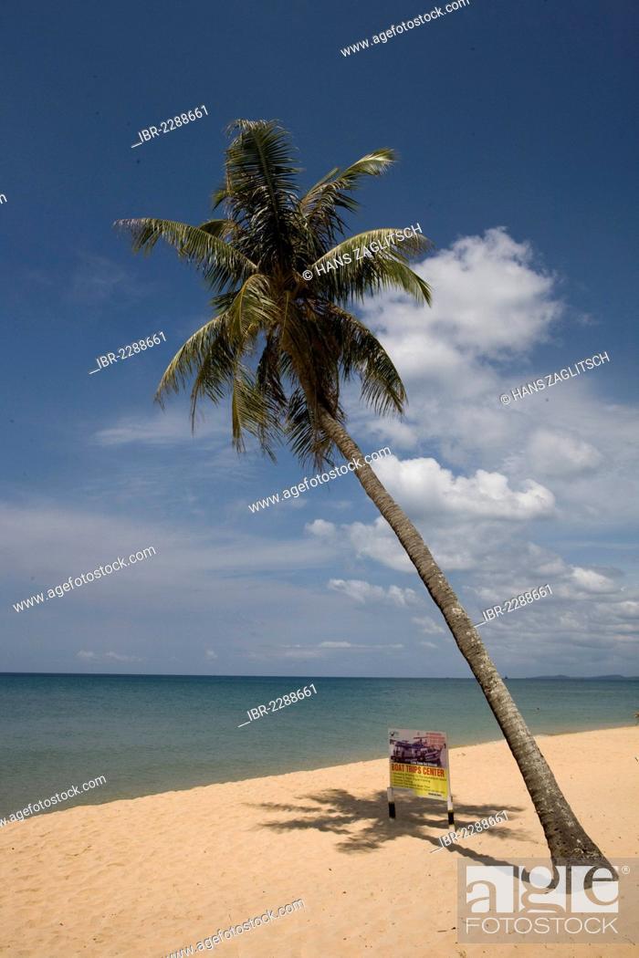 Imagen: Palm and a billboard on Long Beach, Phu Quoc Island, Vietnam, Southeast Asia, Asia.