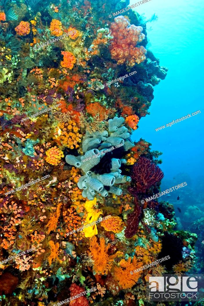Stock Photo: reef with a wide and colourful range of species, among them sponges and other invertebrates, Indonesia.