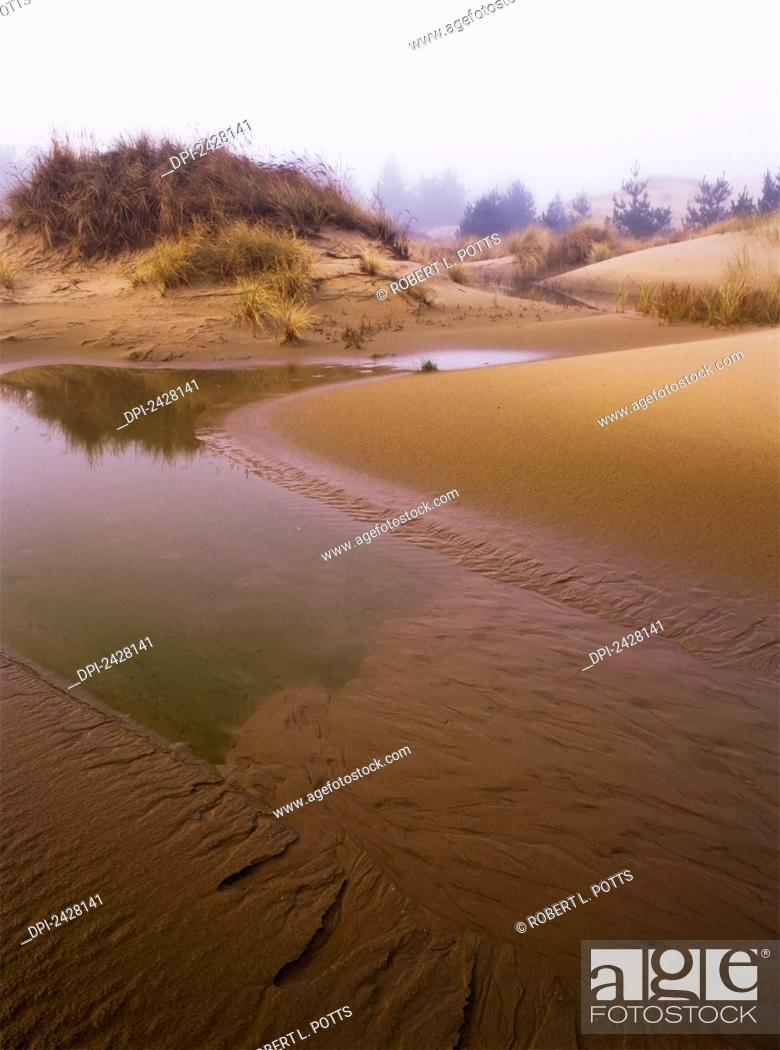 Stock Photo: Shifting sand reveals the water table; Lakeside, Oregon, United States of America.