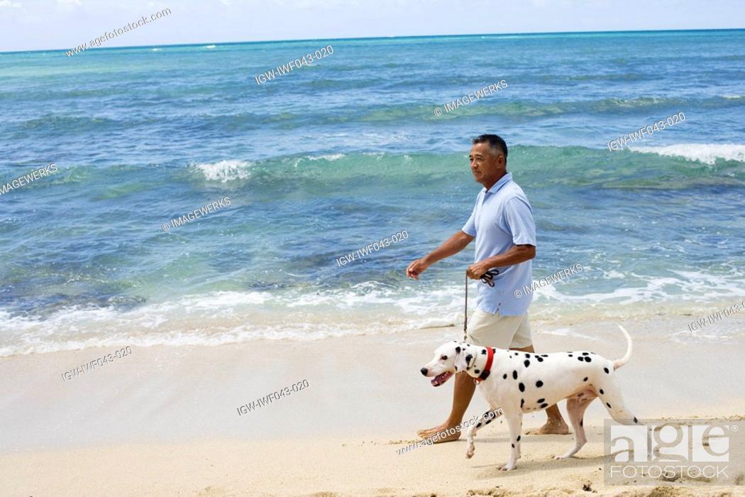 Stock Photo: Man walking with dog at beach.