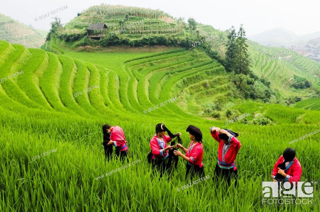 Stock Photo: Colorful Yao women working in the paddy fields of LongJi, Guangxi, China.
