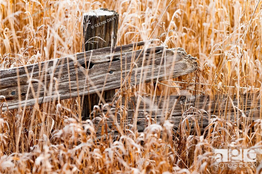 Stock Photo: Split rail fence in autumn grasses with frost, near Fergus, Ontario, Canada.