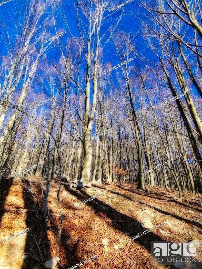 Stock Photo: Montseny Natural Park, Barcelona, Catalonia, Spain, Europe.