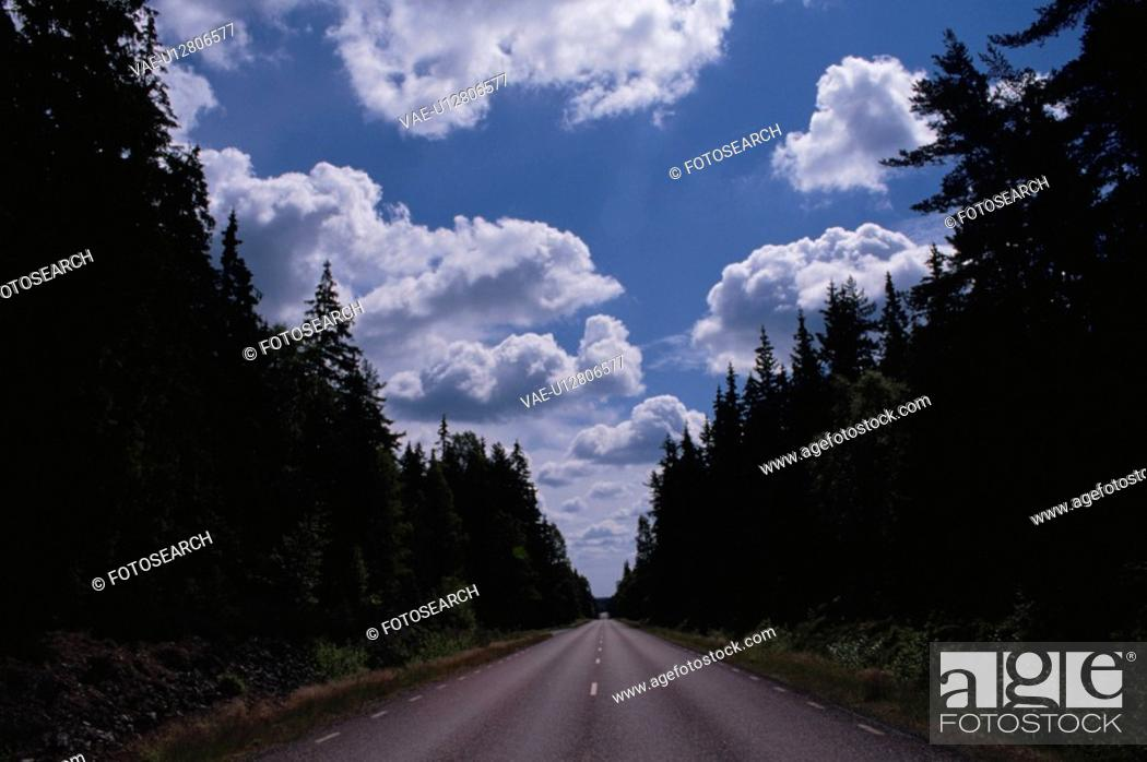 Stock Photo: Woods And A Road.
