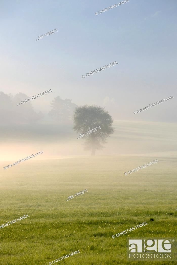 Stock Photo: Morning fog atmosphere in Kleinfeld, Berndorf, Triestingtal valley, Lower Austria, Austria, Europe.