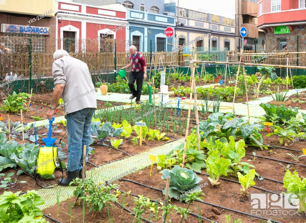 Spraying vegetables with organic liquid fertilizer made from