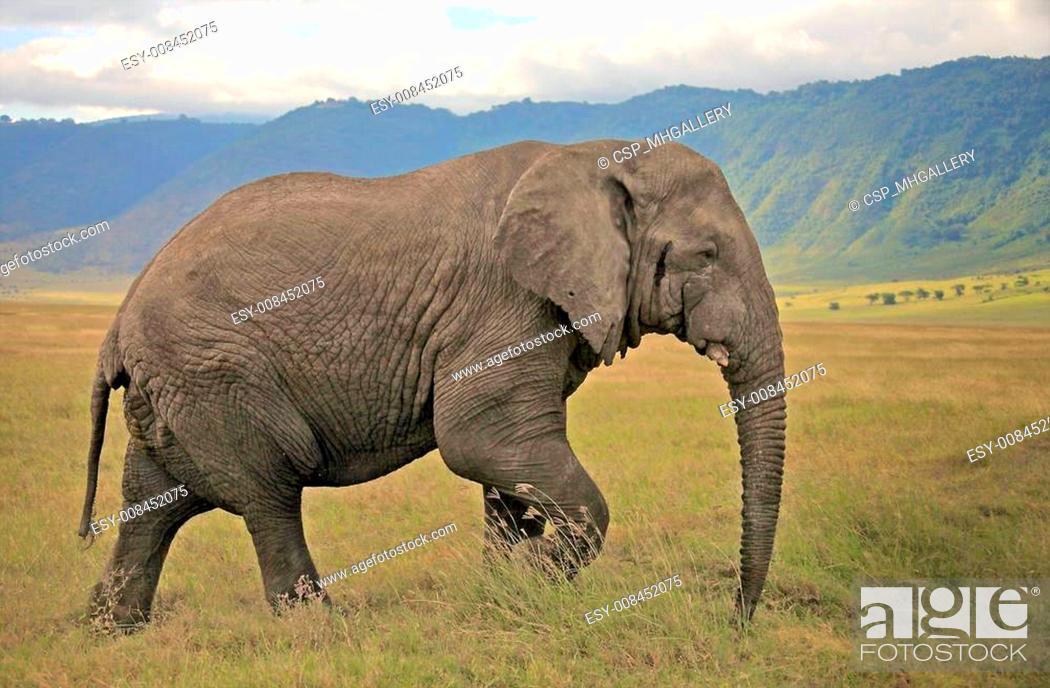 Stock Photo: Elephant Portrait.