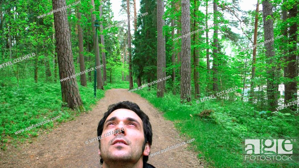 Stock Photo: Male looking up in a Swedish forest.