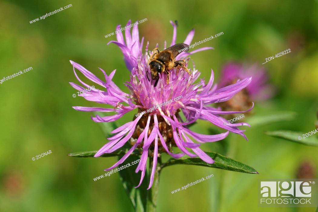 Stock Photo: Blüte mit Biene.