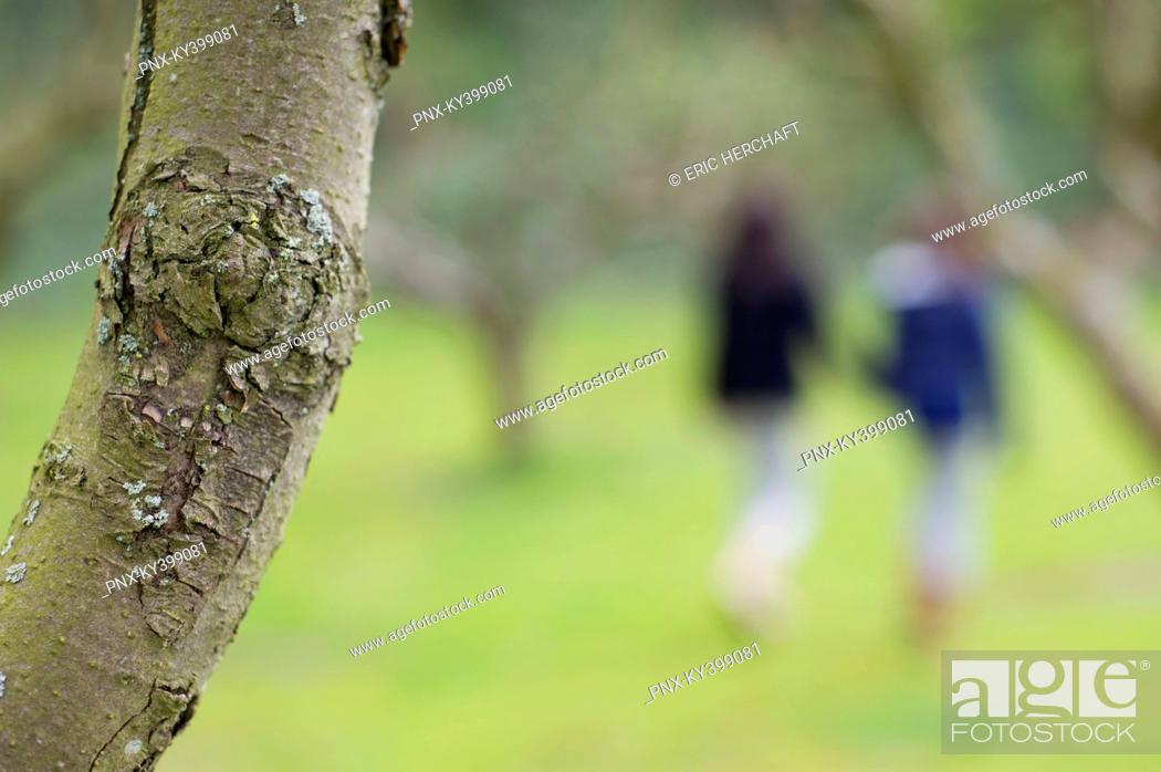 Stock Photo: Close-up of a tree trunk with a woman and her daughter walking in an orchard in the background.