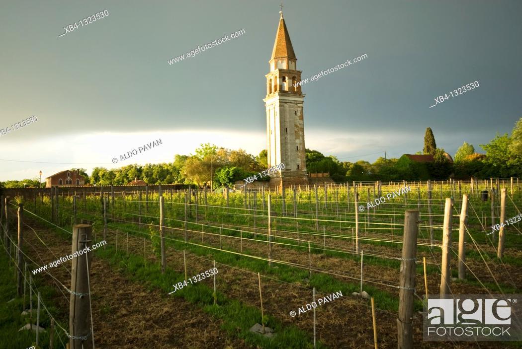 Stock Photo: Italy, Venice, Mazzorbo island, Estate of Scarpa Volo, now Venissa hotel and restaurant, vineyards.