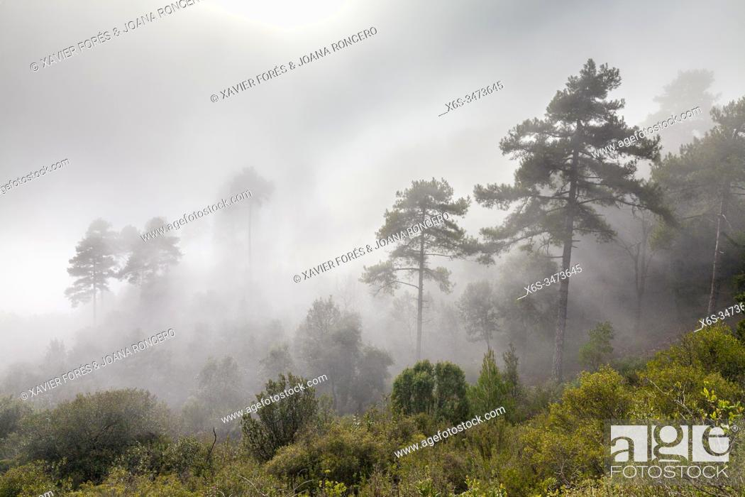 Stock Photo: Foggy Forest in the Natural Park of Montserrat mountain, Barcelona, Spain.