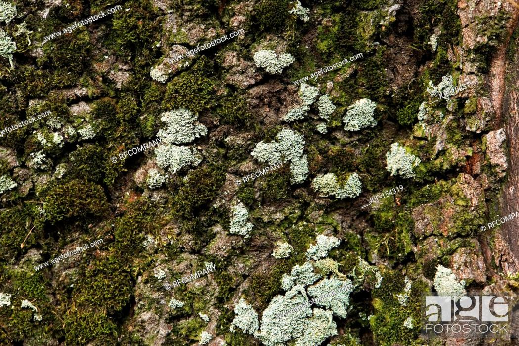 Stock Photo: bark of a tree - covered with moss and lichen.