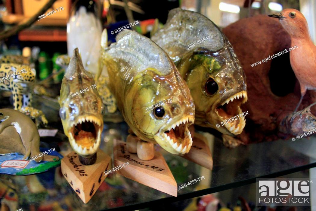 Mounted piranha fish for sale in an open air market, Campo Grande