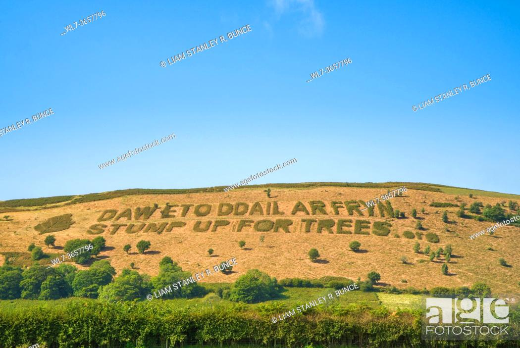 """Stock Photo: Cut into bracken in the Welsh hills is the Welsh phrase """"""""daw eto ddail ar fryn"""""""" meaning """"""""again leaves come on a hill"""""""" below are the words """"""""stump up for."""