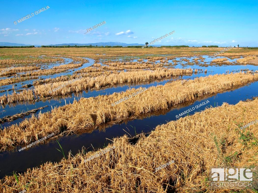 Stock Photo: Flooded ricefields after harvest. Ebro River Delta Natural Park, Tarragona province, Catalonia, Spain.