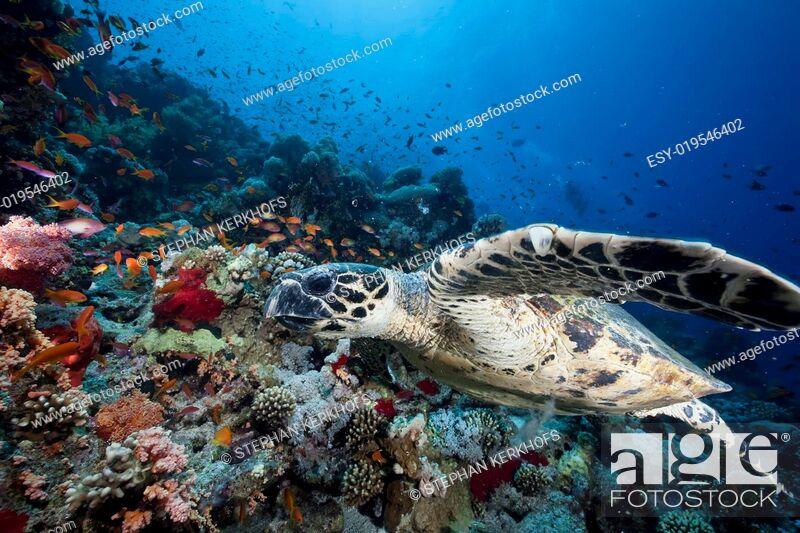 Photo de stock: ocean, sun and hawksbill turtle.