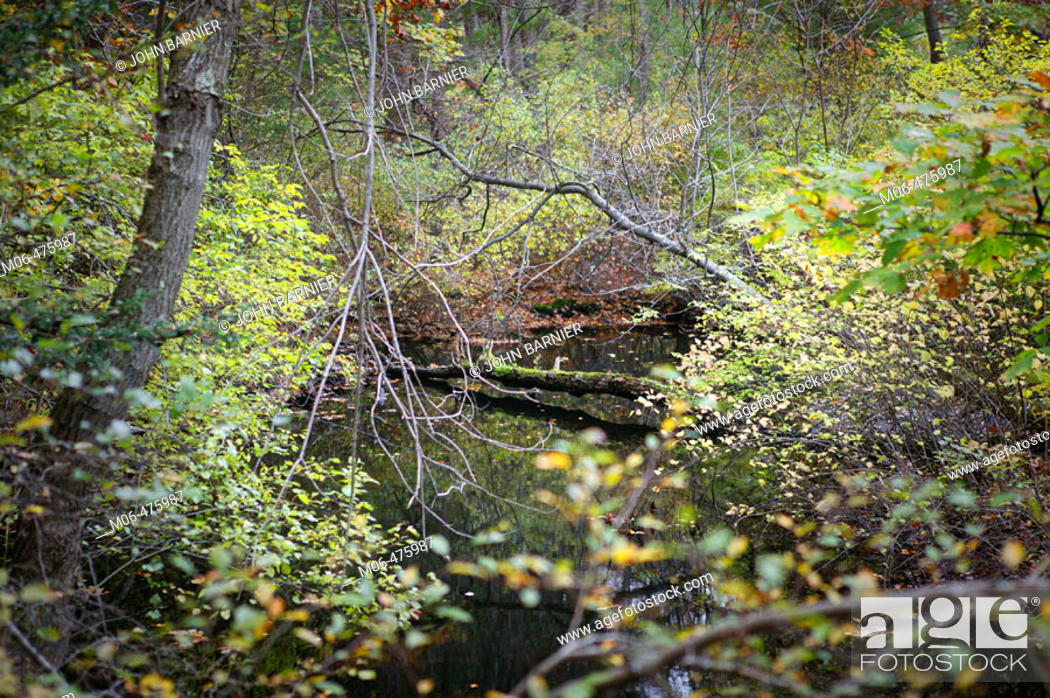 Stock Photo: A view of a creek in Cat Rock Park, in Weston Massachusetts.