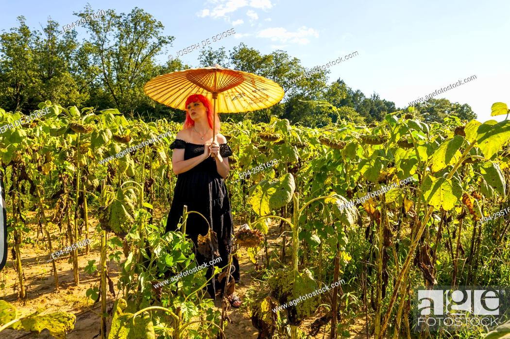 Photo de stock: A 25 year old woman with pink hair, wearing a long black dress in a field of drying sunflowers holding a parasol, looking away from the camera.