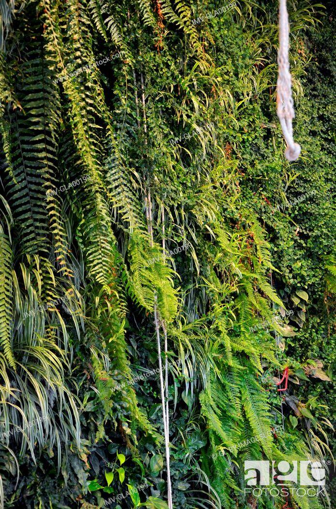 Imagen: Green plants, green background outside.
