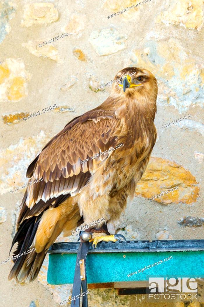 Stock Photo: Bird of Prey.